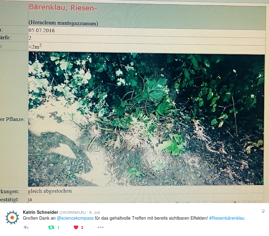 Korina APP Riesenbärenklau Meldung - Tweet