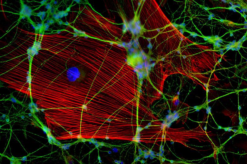 Cell Portraits von Dr. Jan Schmoranzer - cc by nc nd